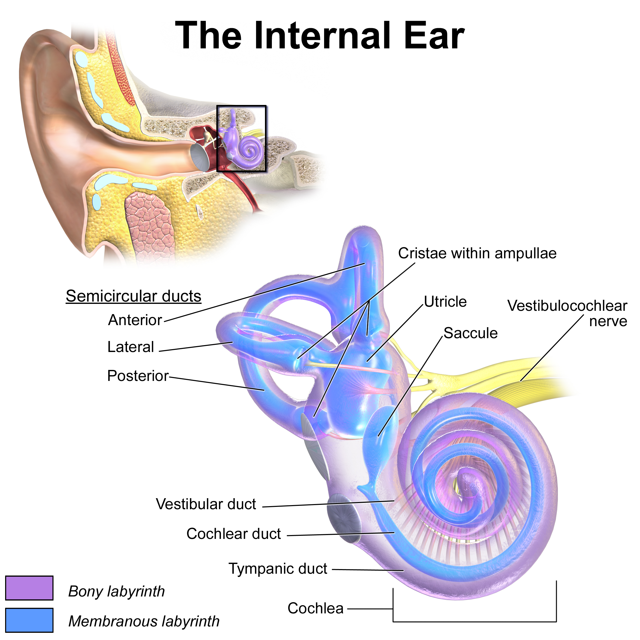 Important Facts about Noise Induced Hearing Loss and How to ...