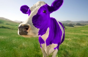 sound-design-live-get-booked-solid-in-pro-audio-purple-cow